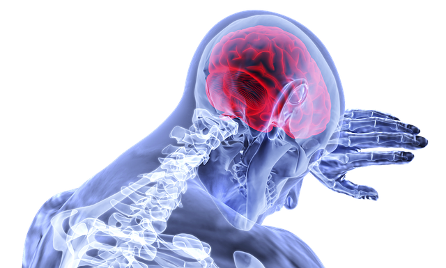 červený mozek