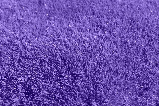 purpurový koberec.jpg