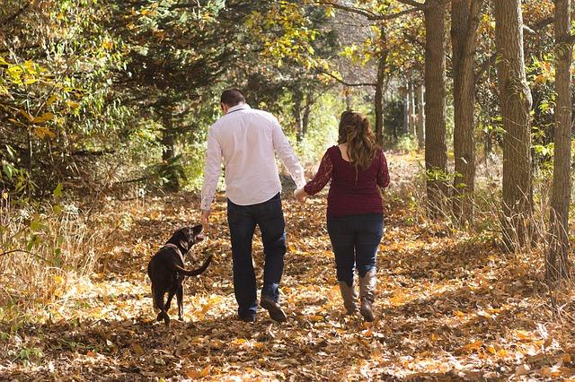 podzimní procházka se psem