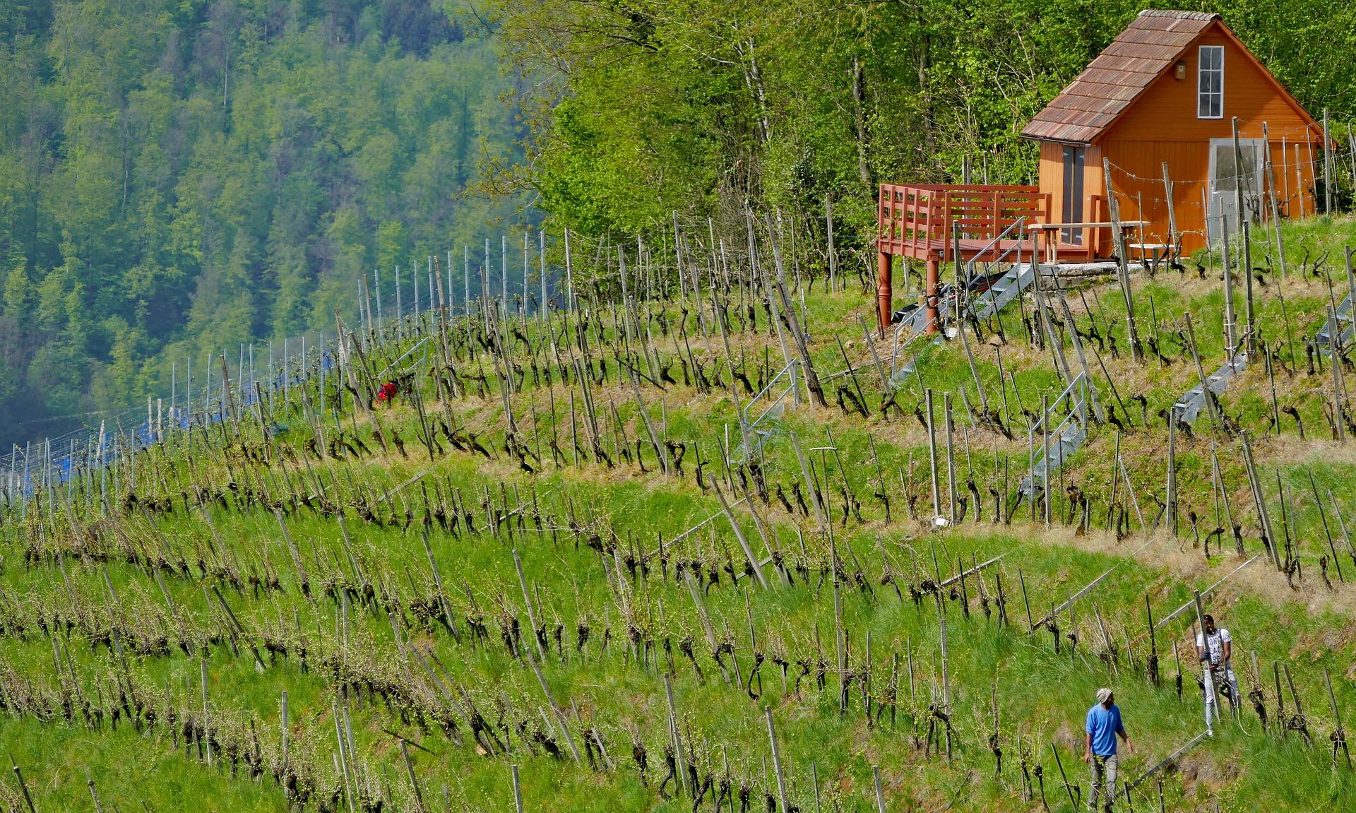 dům ve vinohradu